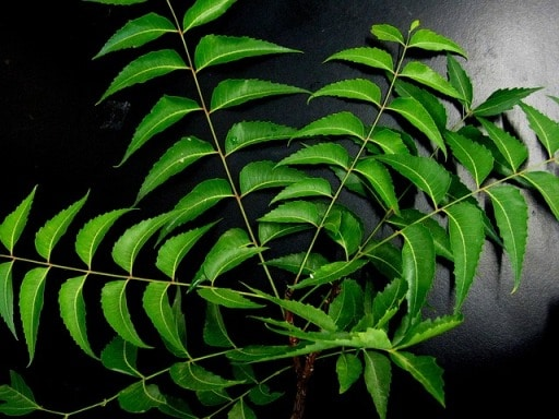 neem-leaves-how to get rid of dandruff naturally